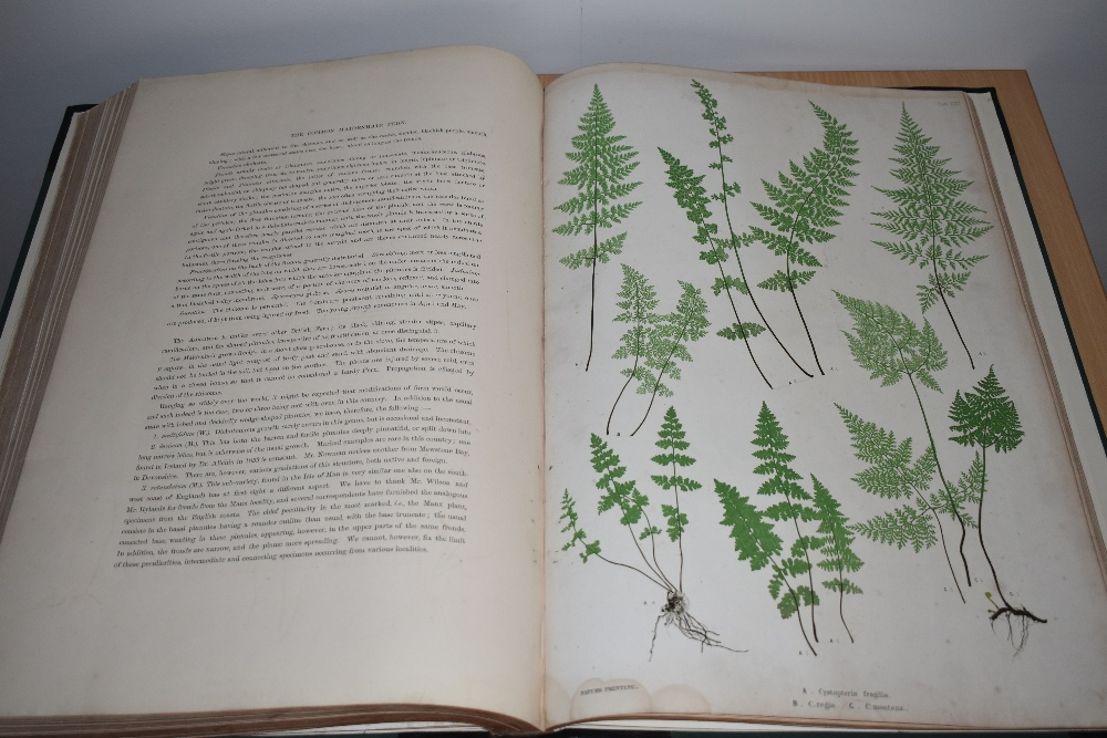 Natural History. Pteridology. Moore, Thomas; Lindley, John (ed.) - The Ferns of Great Britain and - Image 8 of 10