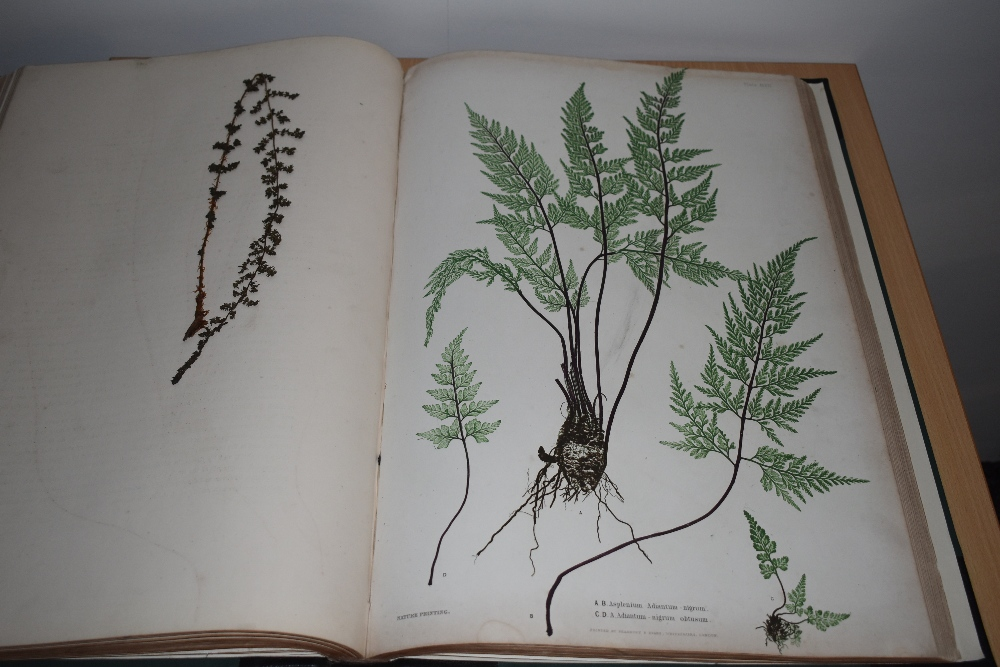 Natural History. Pteridology. Moore, Thomas; Lindley, John (ed.) - The Ferns of Great Britain and - Image 10 of 10