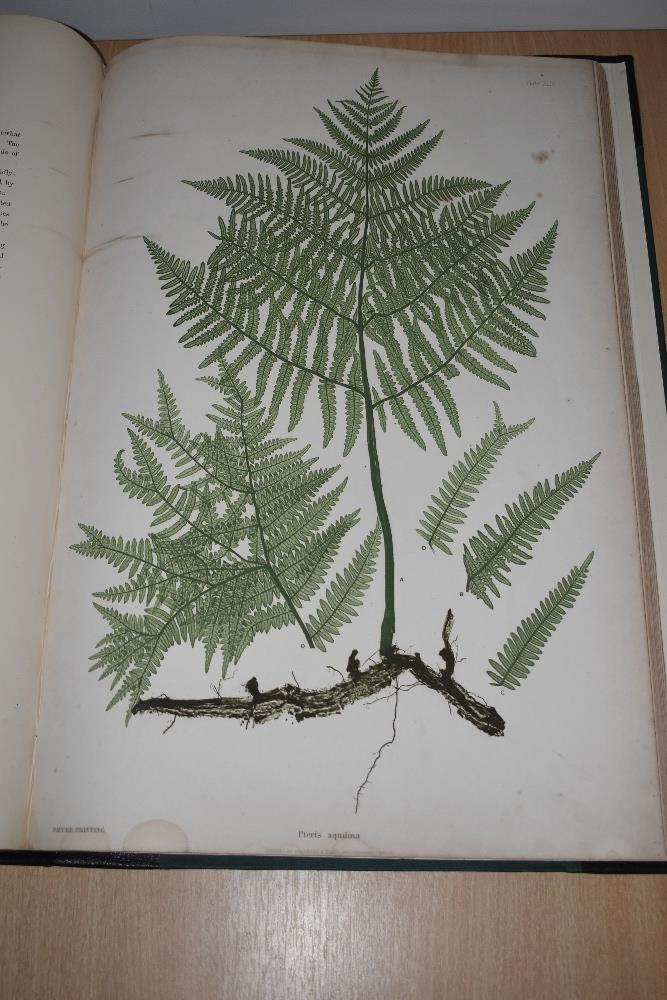Natural History. Pteridology. Moore, Thomas; Lindley, John (ed.) - The Ferns of Great Britain and - Image 7 of 10