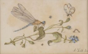 ALOYS ZÖTL (Freistadt, 1803 - Eferding, 1887) - Naturalistic drawing with dragonfly, butterfly and o