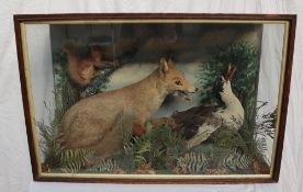 Taxidermy - A display of a Fox attacking a duck with a squirrel on a branch in the background, 91.