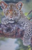 After Stephen Gayford Out of Sight A leopard in a tree branch A limited edition print