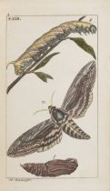 J.J. SCHMUZER 1795 - 1810: ATLAS OF INSECTS AND BUTTERFLIES Ca. 1810 Colored copperplate engravings,