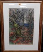 Sidney Grant Rowe (1861-1928), Woodland scene, watercolour, signed, 49cm x 32.5cm.