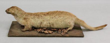 A stuffed otter, 99cm long, on a rectang