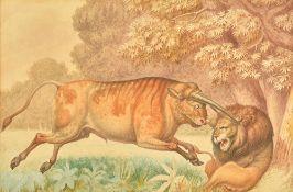 Samuel Daniell (1773-1811), Wild Bull attacking a Lion, watercolour, 17cm x 25.5cm. Illustrated.