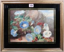 English School (19th century). Still life of Morning Glory and berries, watercolour, 22cm x 30cm.