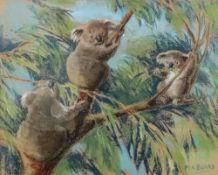 Margeret K Banks (20th Century), Koalas,