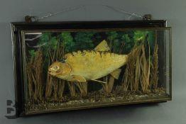 A Taxidermy Fish