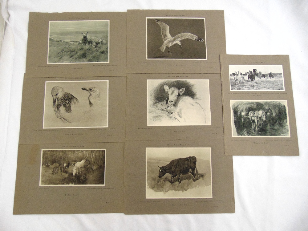 Lucy Kemp-Welch R.B.A seven lithographic prints from the original collection of pictures