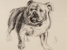 APRIL SHEPHERD (TWENTIETH/ TWENTY FIRST CENTURY) MIXED MEDIA ON PAPER ?English Bulldog I?