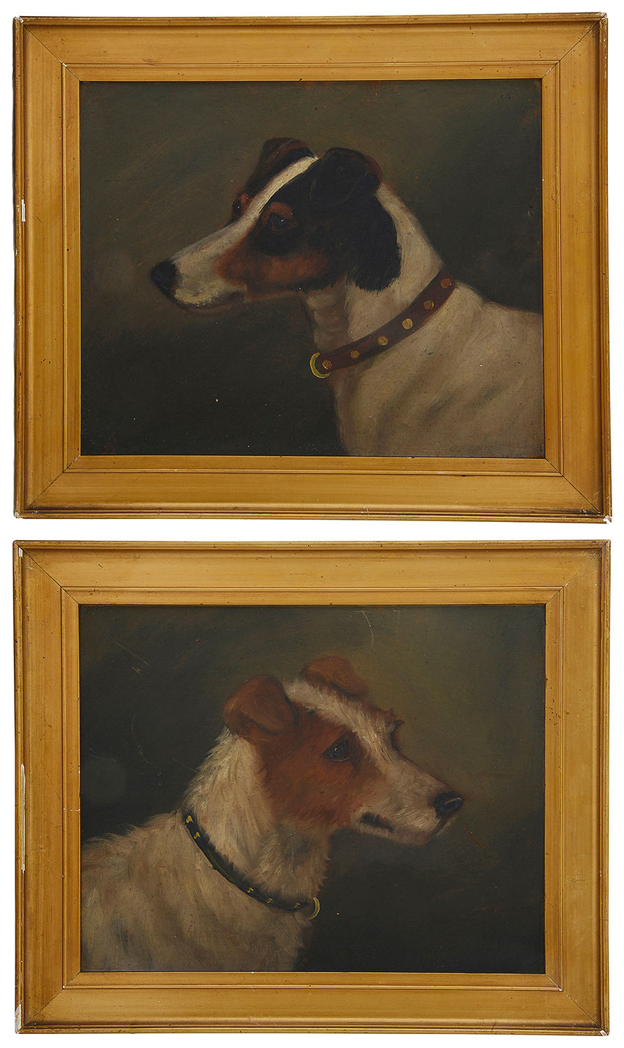 Lot 44 - Early 20th century Brit. School, A pair of portraits of Parson Jack Russell Terriers, oil on board