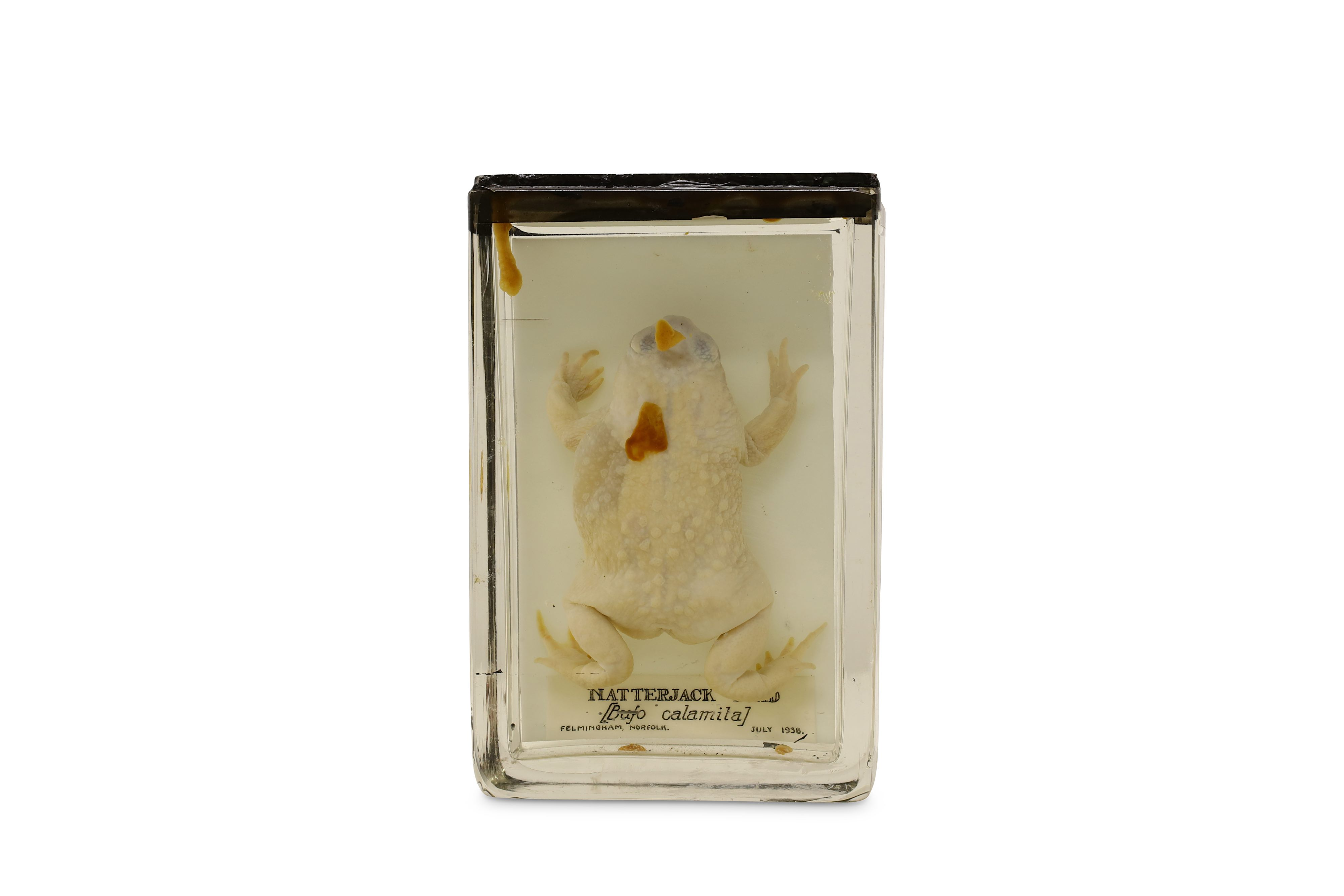 TAXIDERMY: A COLLECTION OF NINE LATE 19TH / EARLY 20TH CENTURY EX-MUSEUM WET / PICKLED SPECIMENS IN - Image 2 of 9