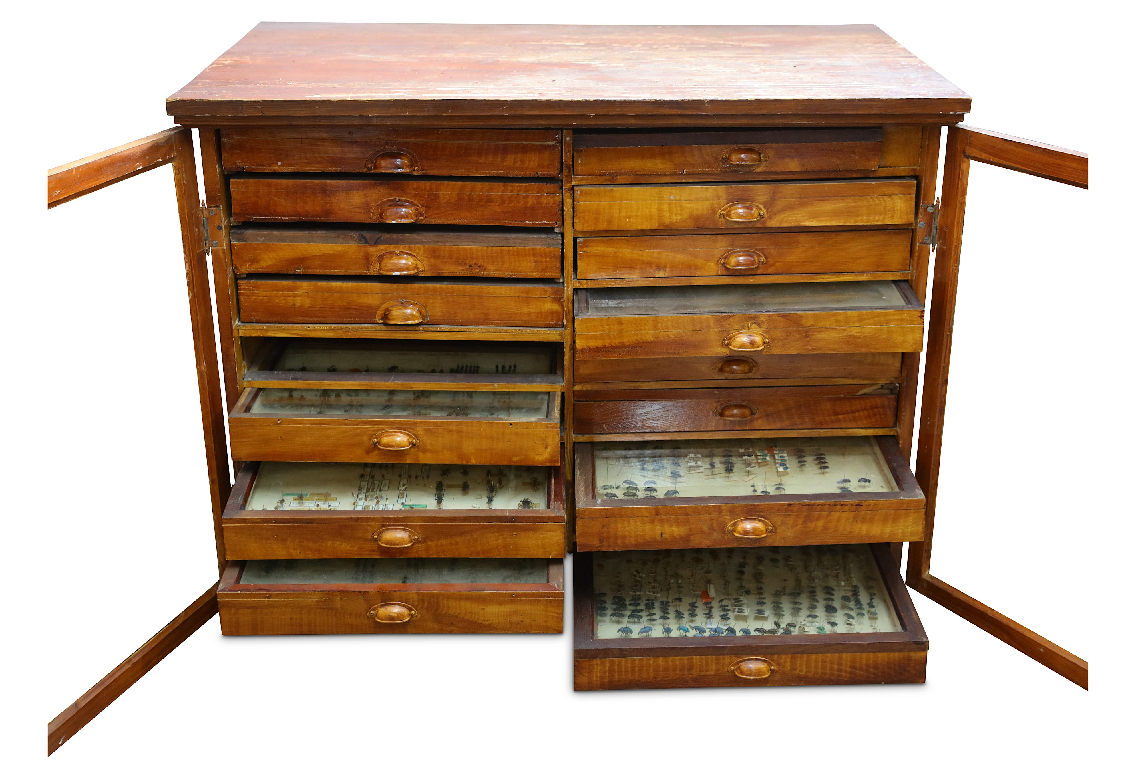 Lot 14 - TWO EARLY 20TH CENTURY ENGLISH STAINED WOOD COLLECTOR'S CABINETS DISPLAYING A LARGE COLLECTION OF IN
