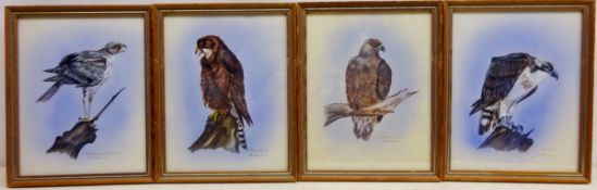Birds of Prey, four gouache paintings signed, tiled and dated '79 by M.J.