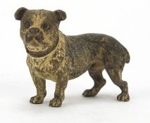 Austrian cold painted bronze Bulldog, possibly by Franz Xaver Bergmann, indistinct impressed marks