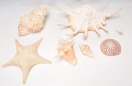 A mixed group of seashells of varying sizes and ty