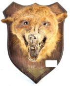 EARLY 20TH CENTURY TAXIDERMY FOX HEAD ON OAK SHIELD