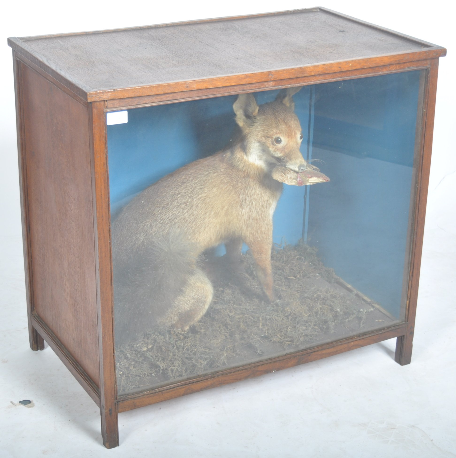 VICTORIAN CASED TAXIDERMY EXAMPLE OF A FOX - Image 2 of 6