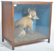 VICTORIAN CASED TAXIDERMY EXAMPLE OF A FOX