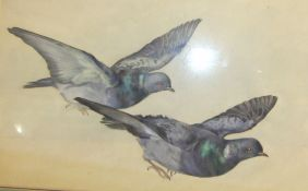 Alice Lizzie West, 'Two Pigeons', watercolour, 33 x 50cm, inscribed and titled in ballpoint on label
