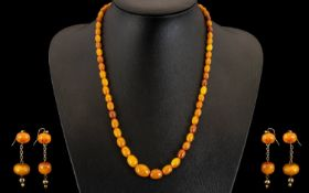 A Superb Quality Early 20th Century Butterscotch Natural Amber Beaded Graduated Necklace. With