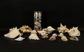 Large Box of Shells. Box of assorted large shells, of various shapes and sizes.