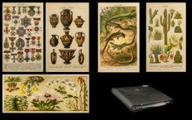 Album of Coloured Plates in photo album, plates of birds, flowers, etc.