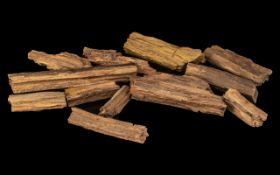 Twelve Fragments of Petrified Fossilized