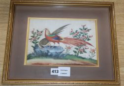 19th century Chinese School, gouache on pith paper, Study of pheasants, 17 x 24cm