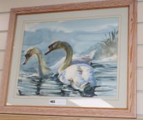 20th century British School, watercolour, Study of swans, 36 x 46cm