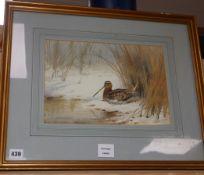 John Cyril Harrison (1898-1985), watercolour, Snipe resting, signed, 23 x 33cm