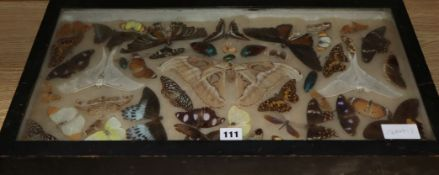 A quantity of mixed framed taxidermic butterflies, dragonflies, beetles, etc.