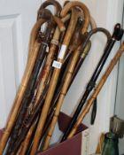A quantity of walking sticks