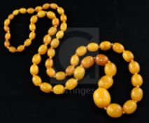 A single strand graduated oval amber bead necklace, gross weight 99 grams, 97cm.