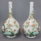 A pair of Chinese enamelled porcelain bottle vases, each painted with Birds of Paradise amid