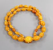 A single strand graduated oval amber bead necklace, gross weight 47 grams, 69cm.