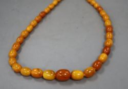 A single strand graduated oval amber bead necklace, 64cm, gross 59 grams.