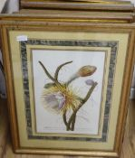 Thirteen assorted gilt framed botanical prints, approximately 52 x 34cm