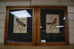A pair of Victorian watercolour and featherwork pictures of songbirds, maple framed, frames
