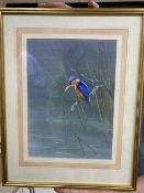 Ron David Digby (b.1936), gouache on light blue paper, Kingfisher, signed, 32 x 23cm