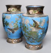 A pair of Japanese Meiji period blue ground cloisonne vases, on hardwood stands, 32cm