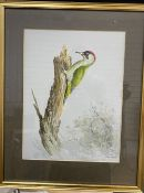 Ron David Digby (b.1936), gouache on paper, Green Woodpecker, signed, 33 x 24cm