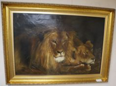 After Herbert Dicksee, oil on canvas, Study of lions, initialled GD, 48 x 71cm