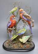 Henry Ward (1812-78) - A Victorian taxidermic group of five birds, attached maker's label within,
