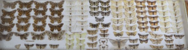 A cased collection of named butterflies, width 67cm