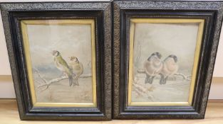 W.H. Hawkins, pair of oils on board, Bull finches and Gold finches in winter, signed, 26 x 19cm