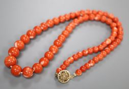 A single strand coral bead necklace, with gilt sterling clasp, 45cm, gross 32 grams.CONDITION: