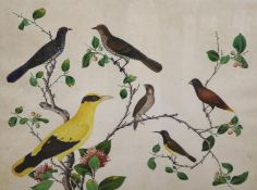 19th century Anglo Chinese School, gouache on paper, Study of Exotic birds on flowering branches,