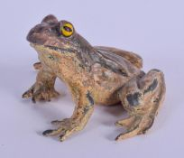 A COLD PAINTED BRONZE FROG. 5 cm x 4 cm.